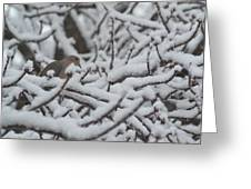 Snow Dove Greeting Card