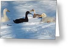 Snow Ducks Greeting Card