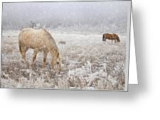 Snow Falling On Horses Greeting Card