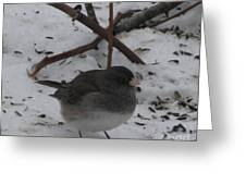 Snow Finch Greeting Card