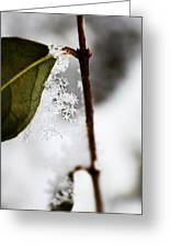 Snow Flakes Greeting Card
