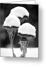 Snow Flowers Bw Greeting Card