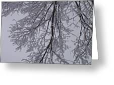 Snow Frosted Branches Greeting Card