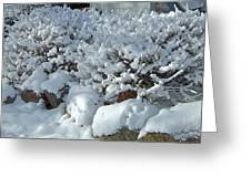 Snow Frosted Bush Greeting Card