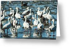 Snow Geese Discussion Greeting Card