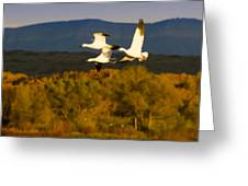 Snow Geese Flying In Fall Greeting Card