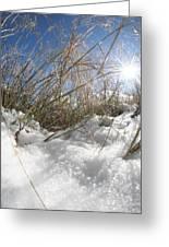 Snow Grass Greeting Card