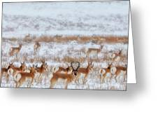 Snow Grazers Greeting Card by Darren  White