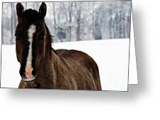 Snow Horse Greeting Card