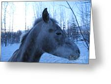 Snow Horse Whisperer  Greeting Card