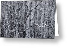 Snow In The Forest Greeting Card