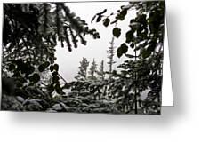 Snow In Trees At Narada Falls II Greeting Card