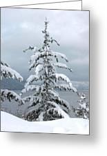 Snow Laden Tree Greeting Card