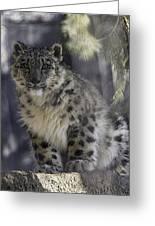 Snow Leopard 1 Greeting Card