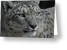 Snow Leopard 15 Greeting Card