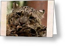 Snow Leopard 17 Greeting Card