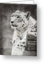 Snow Leopard 2 Greeting Card