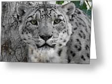 Snow Leopard 5 Greeting Card