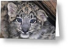 Snow Leopard Cub Endangered Greeting Card