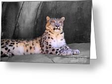 Snow Leopard II Greeting Card