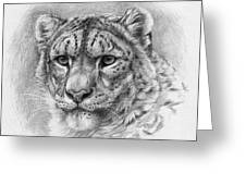 Snow Leopard - Panthera Uncia Greeting Card