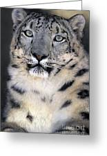 Snow Leopard Portrait Endangered Species Wildlife Rescue Greeting Card