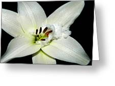 Snow Lilly Greeting Card