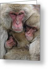 Snow Monkey And Young Greeting Card