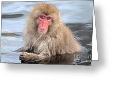 Snow Monkey In The Onsen Greeting Card