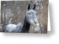 Snow Mule Greeting Card