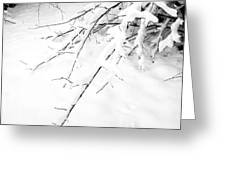 Snow On Branch Greeting Card