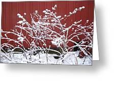 Snow On Burdock Burr Weed Against Red Barn Siding Greeting Card