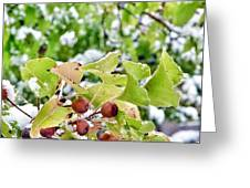 Snow On Green Leaves With Red Berries Greeting Card