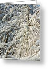 Snow On Ice Greeting Card