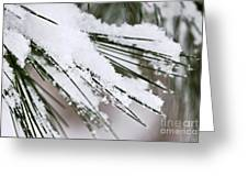 Snow On Pine Needles Greeting Card