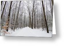 Snow On The Branchs Greeting Card