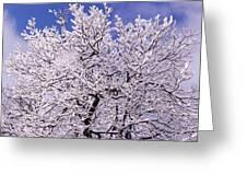 Snow On Tree Greeting Card