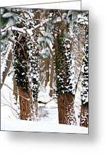 Snow On Tress 2 Greeting Card