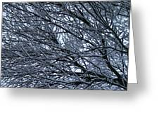 Snow On Twigs Greeting Card