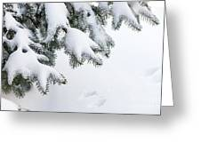 Snow On Winter Branches Greeting Card by Elena Elisseeva