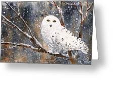 Snow Owl - Canada Greeting Card