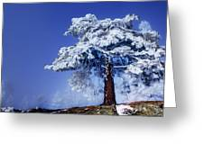 Snow Pine Greeting Card