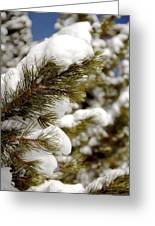 Snow Pine Greeting Card