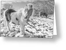 Snow Ponies Greeting Card