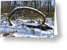 Snow Portal A Fallen Vine Forms An Oval Shape Covered In Snow. Greeting Card