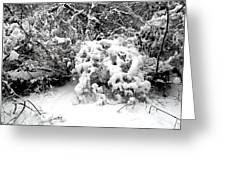 Snow Scene 1 Greeting Card by Patrick J Murphy