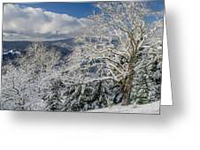 Snow Scene At Berry Summit Greeting Card