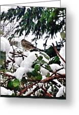 Snow Scene Of Little Bird Perched Greeting Card