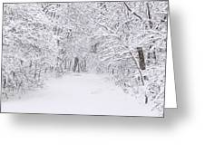 Snow Scene Tree Branches Greeting Card