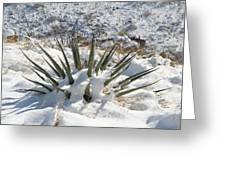 Snow Spines Greeting Card